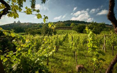 Vinobraní ve Vinařství Šílová